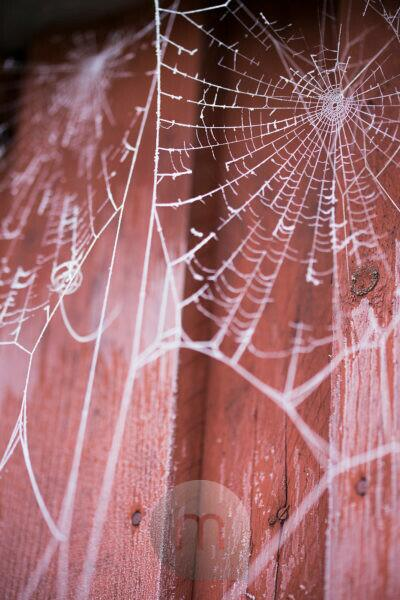 Spider net with hoarfrost on a shed
