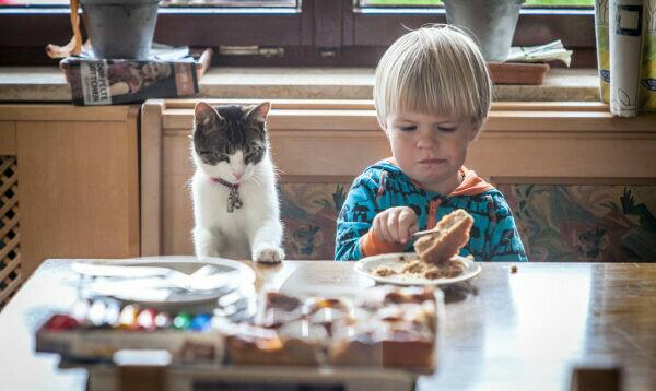 Child with cat with the breakfast at the kitchen table, half portrait