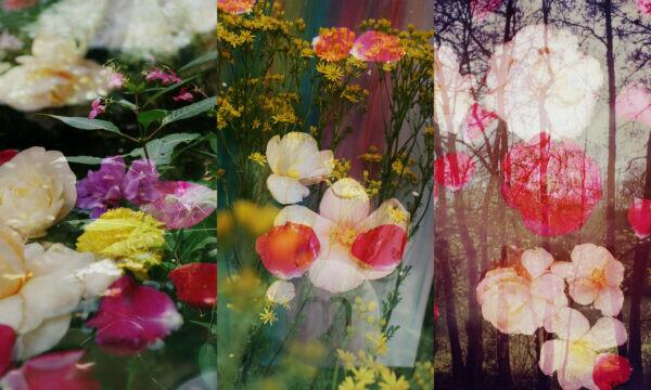 photomontage, flowers, flowers, shrubs, detail, blur,