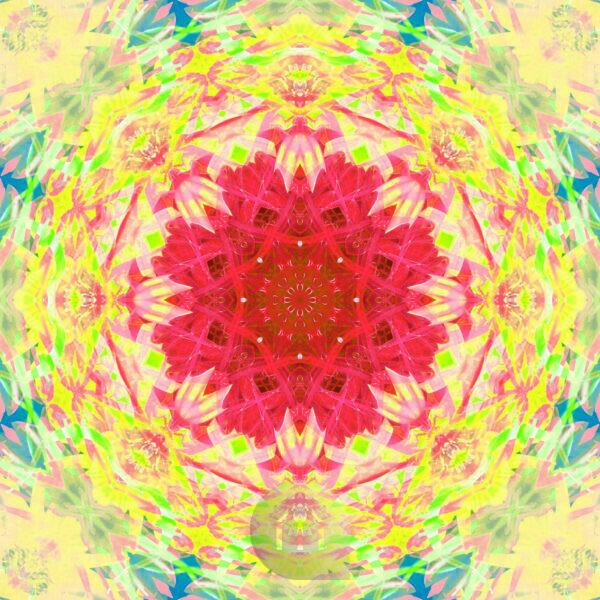 Photographic flower mandala, red, yellow, green, blue,