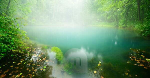 Fog covering the turquoise-coloured souce of the spring of the Rhumequelle, karstic spring, national Geotop, Herzberg, Lower Saxony, Germany