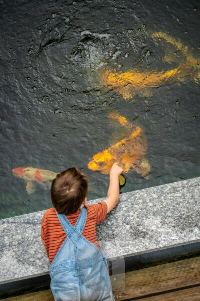 Child at the Koi pond