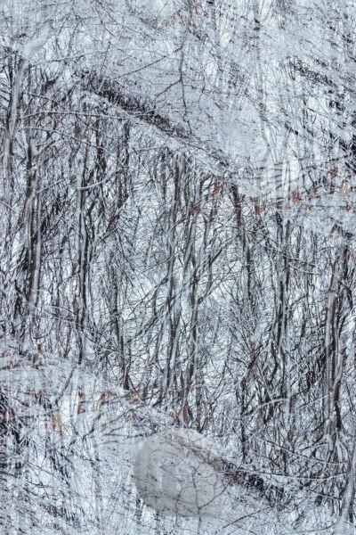 Snowy forest, background picture, photographic art, close-up