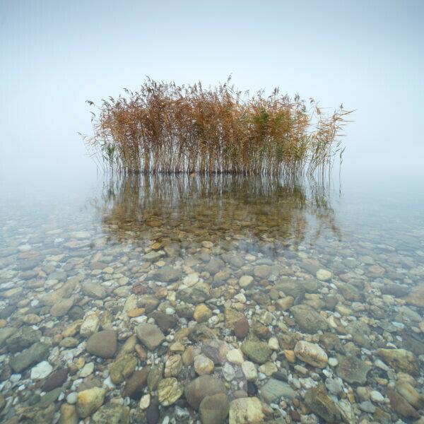 Germany, Saxony-Anhalt, Geiseltalsee, reed in shallow clear water with colorful pebbles, dense fog