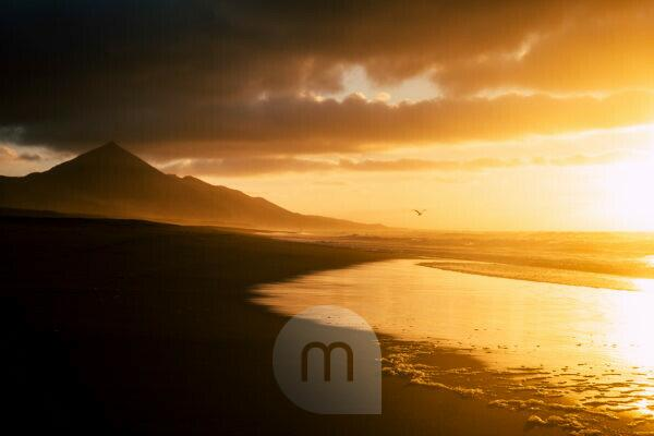 Beautiful timeless landscape at the beach with waves reflecting on the shore and seagull fliyng free in the warm orange sky with clouds - mountains in backgorund for nature outdoor travel paradise