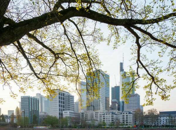 Germany, Hesse, Frankfurt, Frankfurt skyline behind an oak tree.