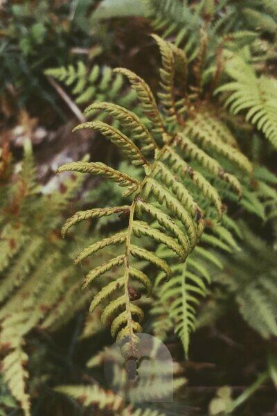 autumnal fern photographed from above