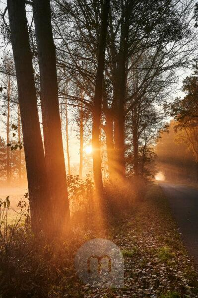 Germany, Lower Saxony, Lüneburg Heath, Brietlingen, Lüdershausen, way to the Reihersee, forest, sunrise, fog, light
